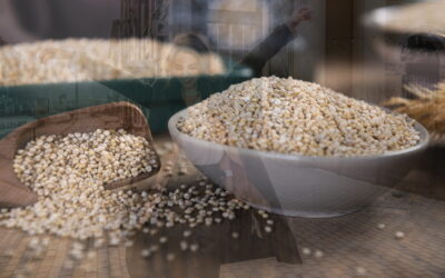 Is Quinoa Good to Lose Weight and How to Include It in Your Diet