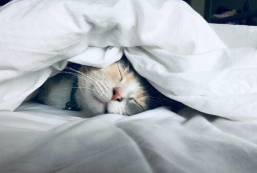 a cat sleeps in bed